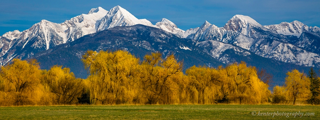 Snowcapped Mission Mountains and Willow Trees North of Missoula, Montana